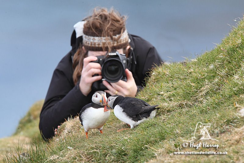 Photographing Puffins by Hugh Harrop