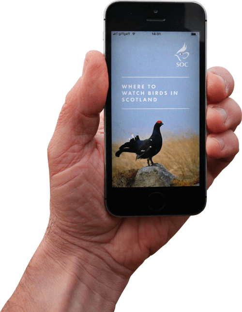 The SOC Birdwatching APP