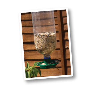 Bottle Top Bird Feeder